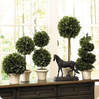 ballard designs boxwood topiaries