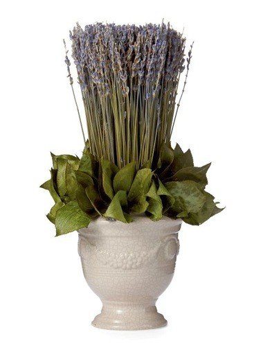 Lavender in White Anduze