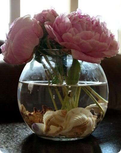 Peony and Shell Arrangement