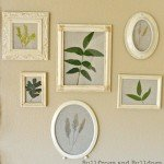 Framed Pressed Leaves