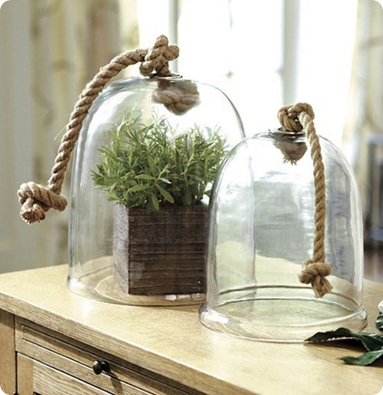greenhouse cloche