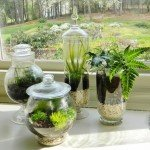 Glass Container Terrariums