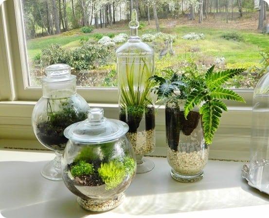 Glass Container Terrariums Knockoffdecor Com