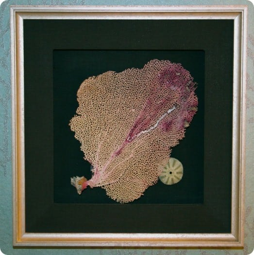 diy framed sea fan