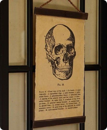 encyclopedia skull canvas