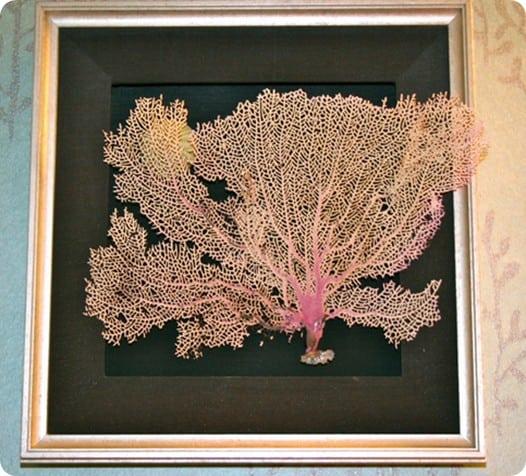 framed sea fan art
