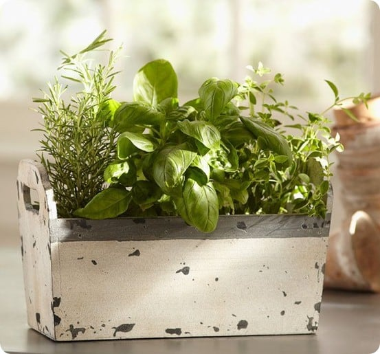 live herb garden
