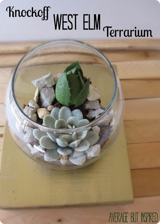 Knockoff West Elm Terrarium Average But Inspired.jpg