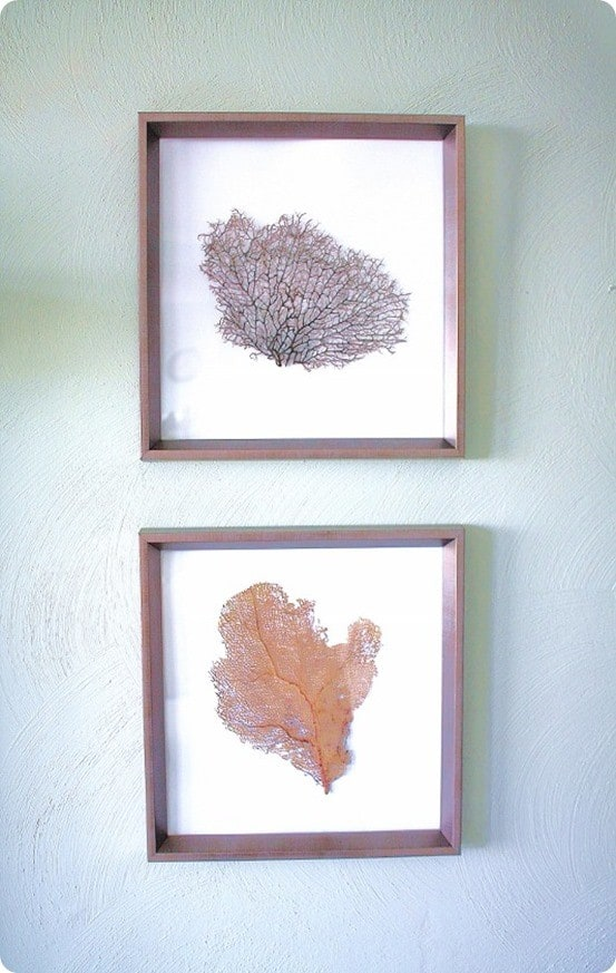 DIY-Sea-Fan-Art