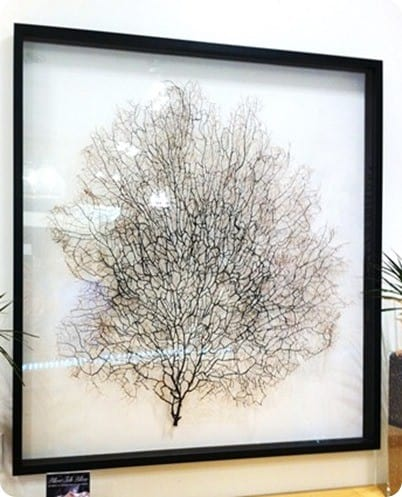 framed sea fan