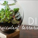 Succulent Terrarium from a Fishbowl