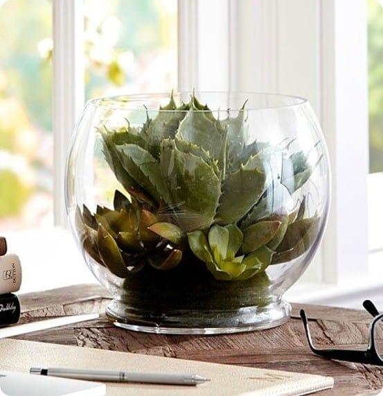 pottery-barn-succulent-arrangement