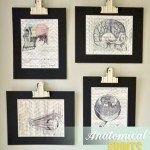 Anatomical Image and Print Wall Art