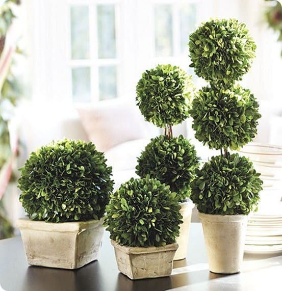 Dollar Store Moss Topiaries Knockoffdecor Com