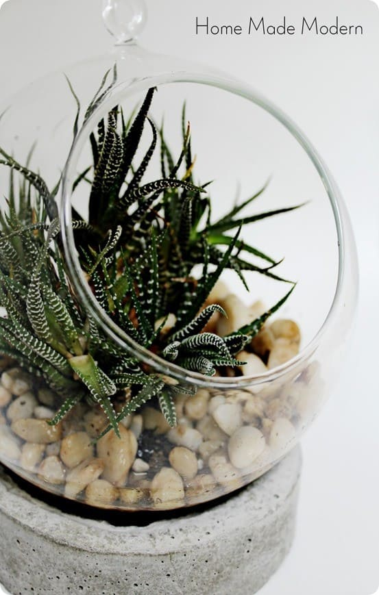 Anthropologie Knock Off Terrarium