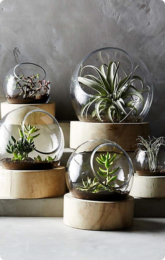 Planetarium Terrarium from Anthropologie