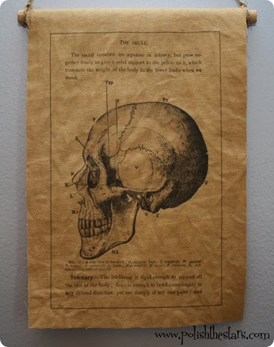 Skull Anatomy Wall Hanging