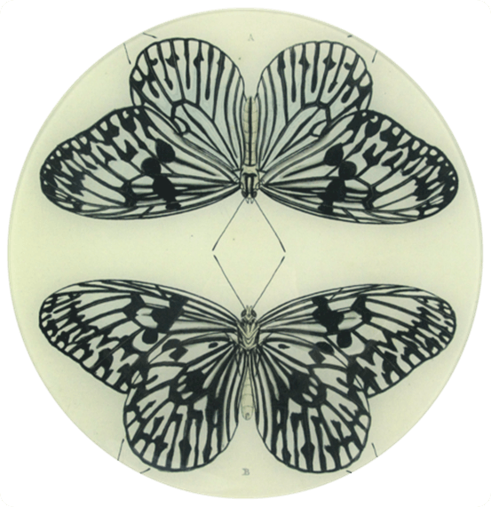 Mirrored Butterfly Plate