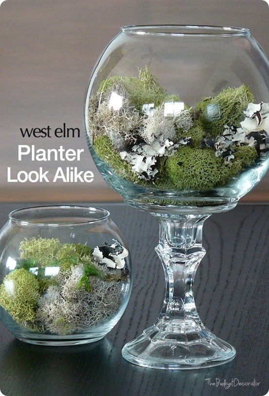 DIY Dollar Store Terrarium ~ Use a dollar store fishbowl and candlestick to make a West Elm knock off terrarium for only $2!