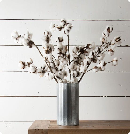 Magnolia Market Cotton Stem