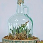 Repurposed Glass Jug Cloche