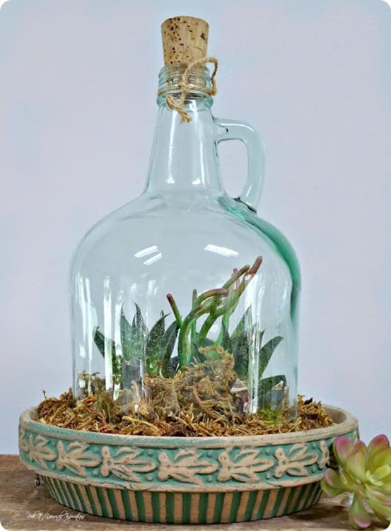Pottery Barn Knock Off Jug Cloche ~ Learn how to cut glass and repurpose a glass jug into a cloche. I love how it's used as a succulent garden!