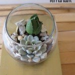 Easy Succulent Terrarium with Brass Base