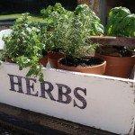 Family Heirloom Herb Garden Box