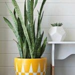 Bright and Cheery Geometric Planter