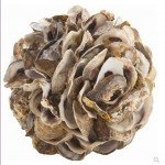 Easy Oyster Shell Cluster Sculptures