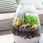 Learn How To Make Your Own Terrarium
