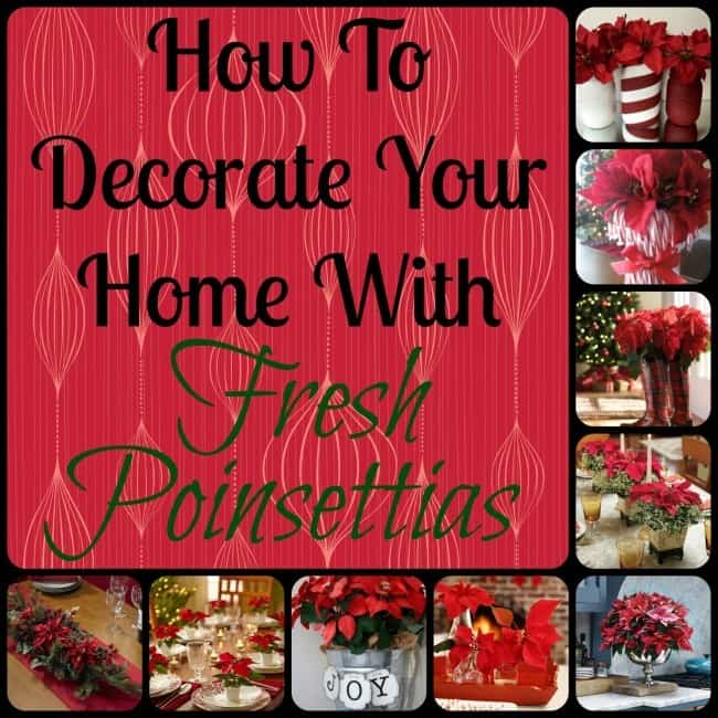 fresh poinsettia decor