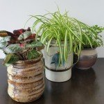 Find Out How To Turn Your Old Pottery Dishes Into Stylish Plant Pots