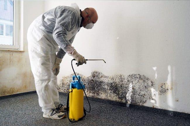 eradicate-mold
