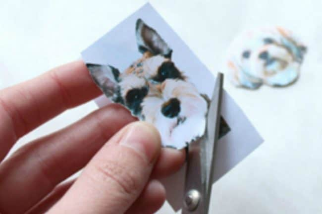 Cutting out the doggie photo
