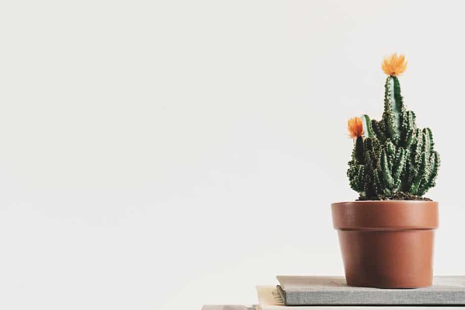 Plants boost mood