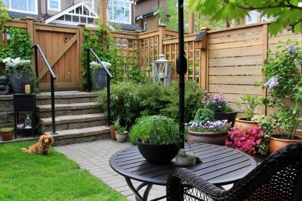 Backyard dog area