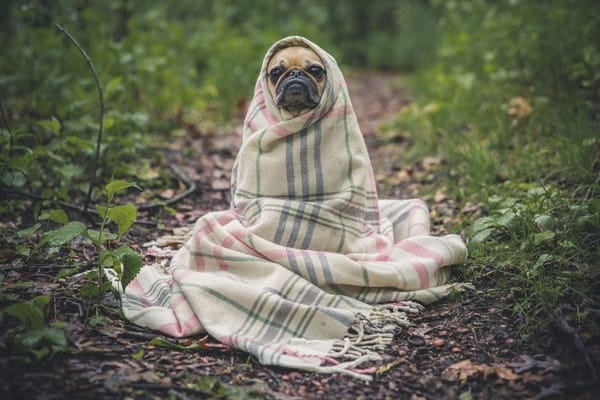 blanket and dog