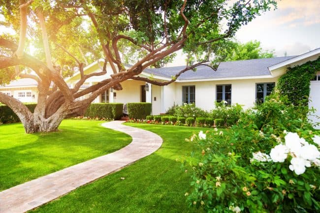 landscaping for beginners