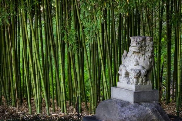 feng shui bamboo