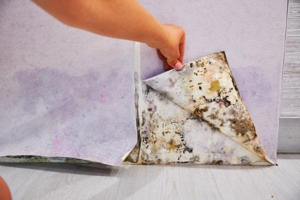 hidden molds in wallpaper