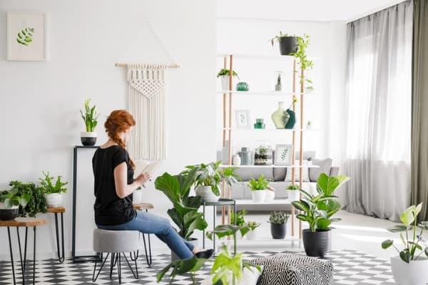 greenifying in living room