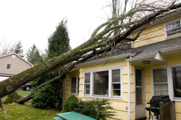 trees fallen on house roof