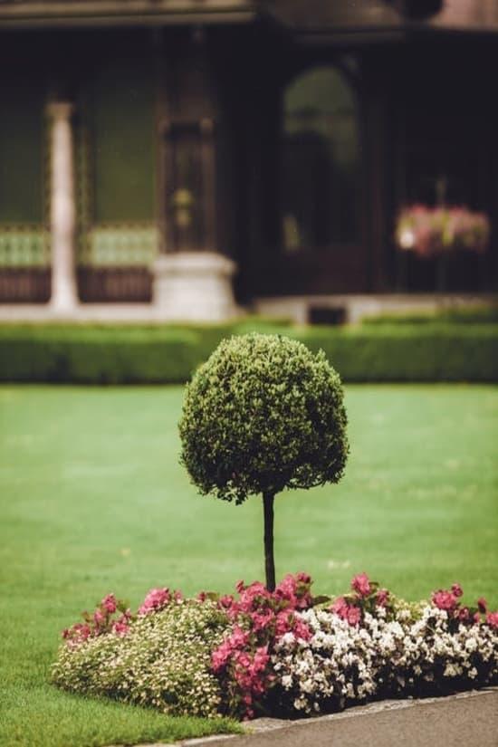 trimmed shrub
