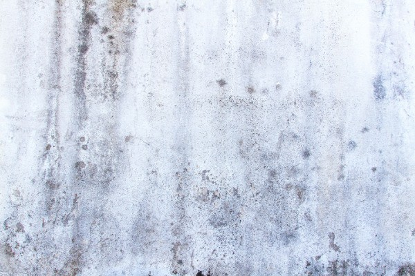 mold at your house paint