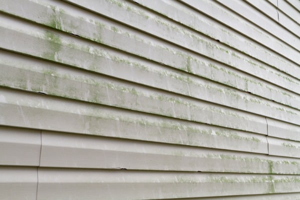 mold on house siding