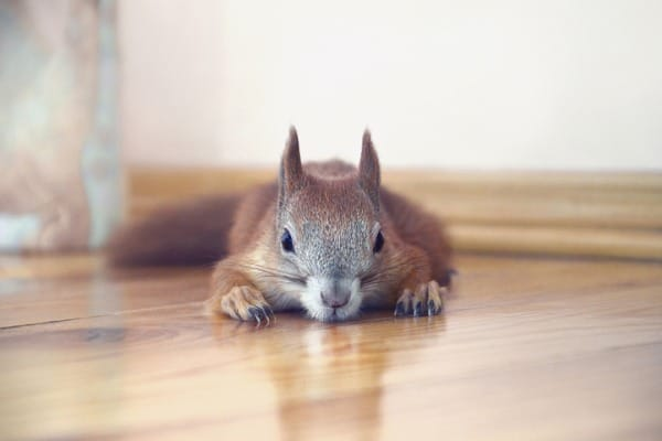 isolate the squirrel in a small room