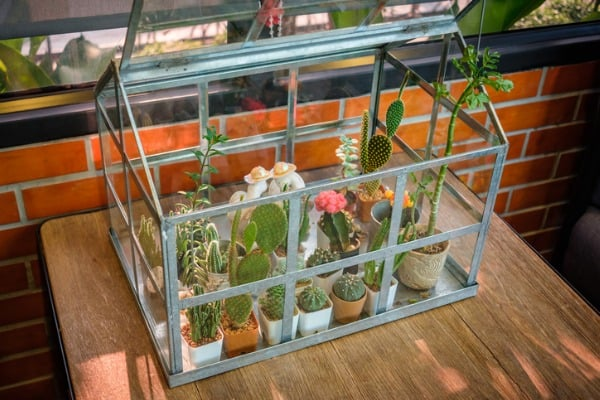 glass box planters