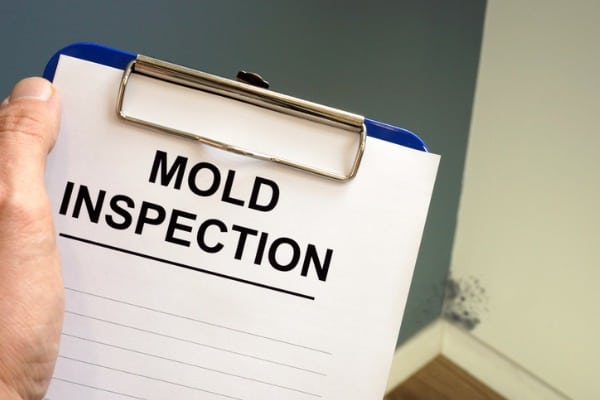 document about mold inspection