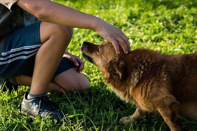 man pet dog